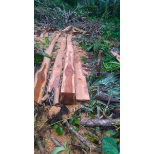 Help Your Brother There Is Teak Wood Stock Red