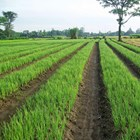 Hydroponics Nutrition Bion-Up Fertilizer Pupuk Kujang Cikampek Non-Subsidized Fertilizer 7