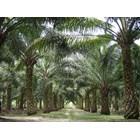 Npk Kujang 30-6-8 Fertilizer Non-Subsidized Compound Fertilizer 8