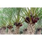 Npk Kujang 30-6-8 Fertilizer Non-Subsidized Compound Fertilizer 5