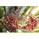Npk Kujang 30-6-8 Fertilizer Non-Subsidized Compound Fertilizer 7