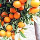 Npk Fertilizer Tablet Fertilizer Non-Subsidized Plant Jeranti Pupuk Kujang 4