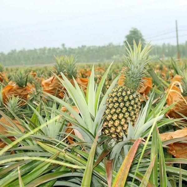 Npk Fertilizer Tablet Fertilizer Non-Subsidized Plant Jeranti Pupuk Kujang