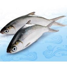 Milkfish Fish Supplier