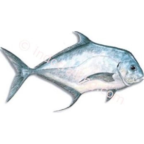 Ikan Kuwe