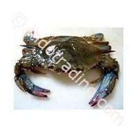 Kepiting Soka