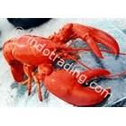Lobster I 1