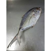 Ikan Mubara