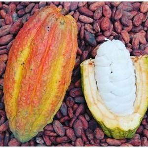 Tropical Cocoa