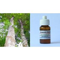 Distributor Pure Essential Oil 10Ml 3