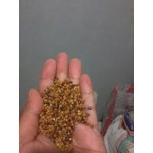 Benih Cm (Calopogonium Mucunoides)