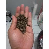 Benih Cp (Centrocema Pubescens) 1