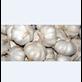 Bawang Putih Berkualitas